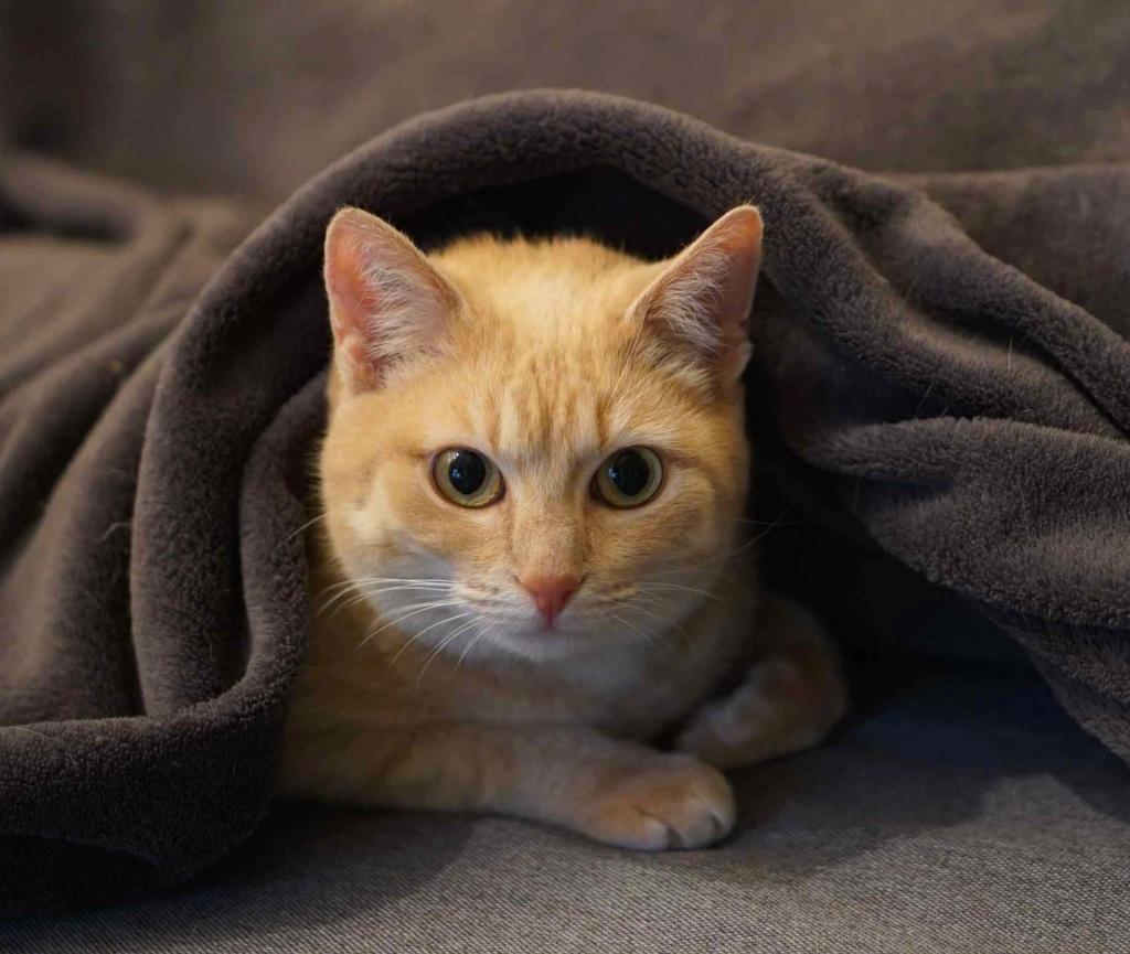 JOALINE, chatte européenne roux tabby, née le 28/08/14 Joalin22