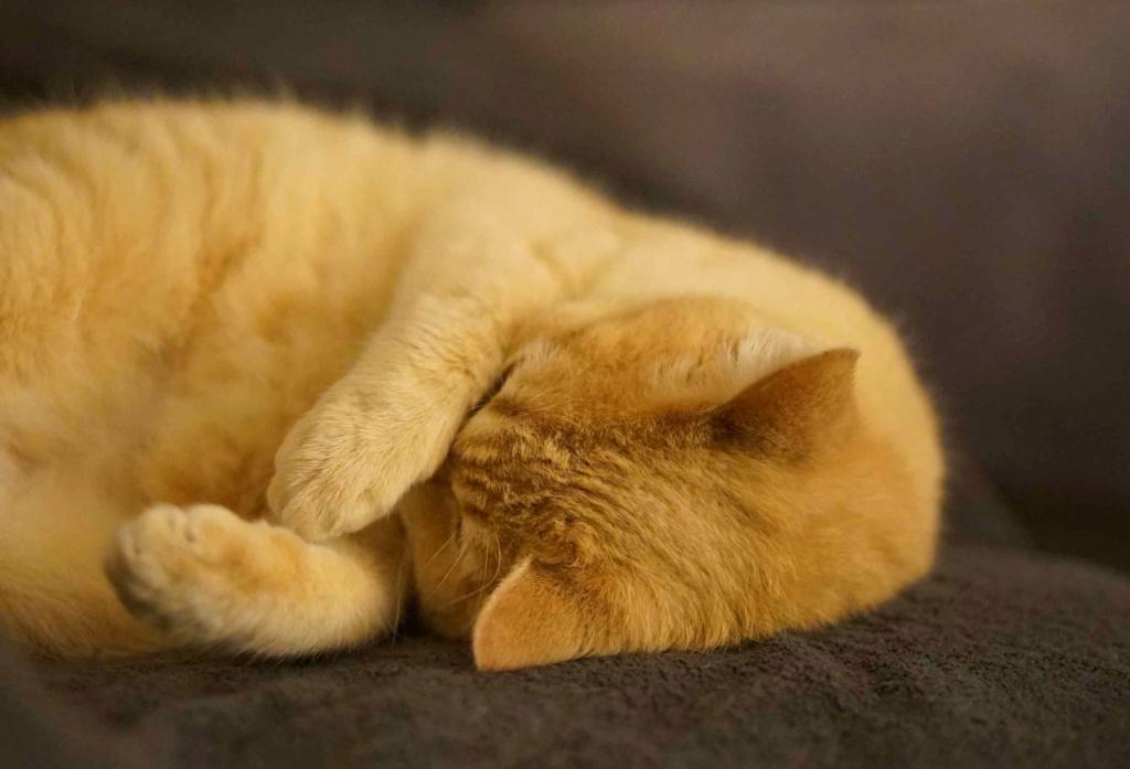 JOALINE, chatte européenne roux tabby, née le 28/08/14 Joalin25