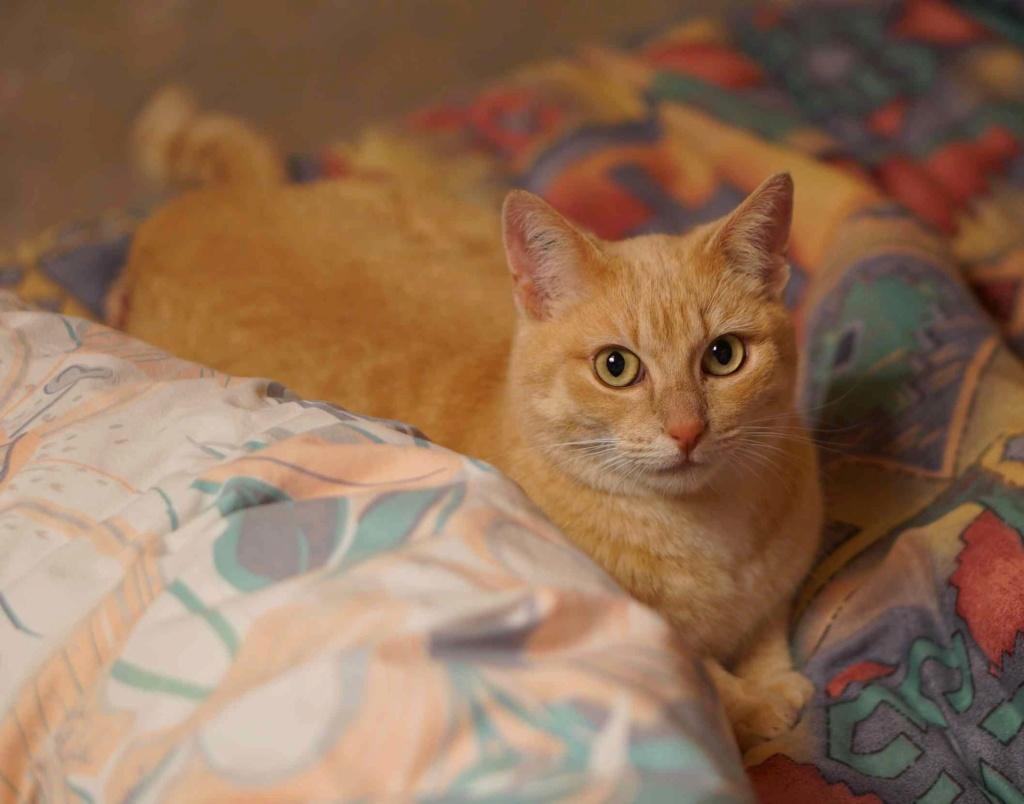 JOALINE, chatte européenne roux tabby, née le 28/08/14 Joalin28