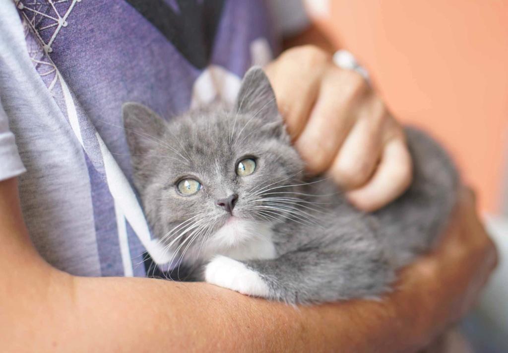 ORINE, chatonne européenne grise&blanche, née le 15/05/18 Orine_27