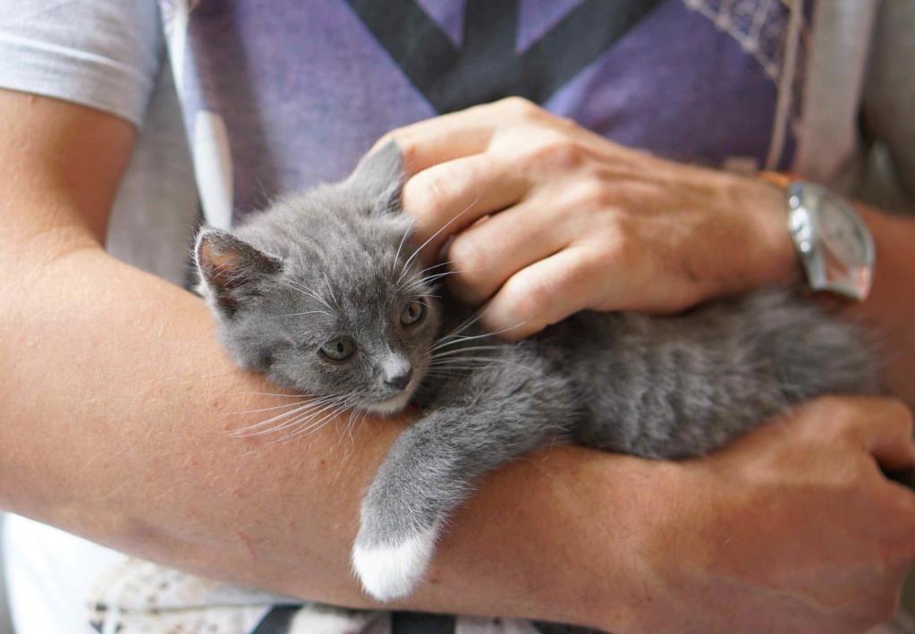 ORINE, chatonne européenne grise&blanche, née le 15/05/18 Orine_28
