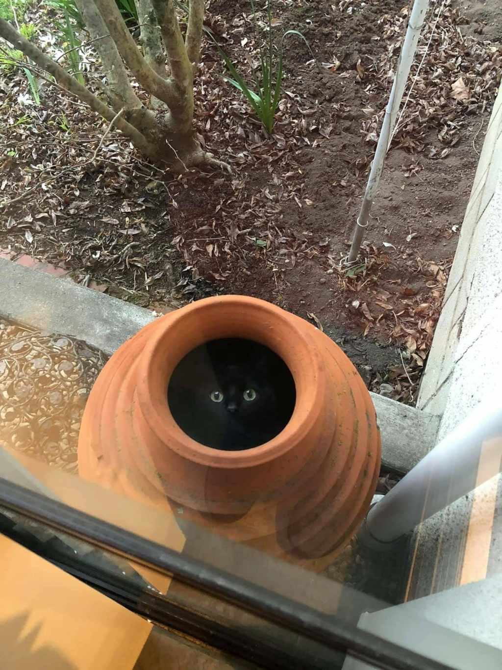 The New Catchat Thread [2] - Page 34 Catpot10