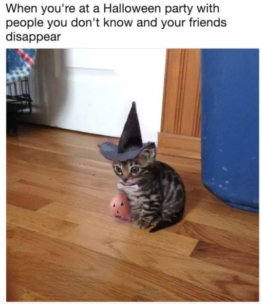 The New Catchat Thread [2] - Page 31 Hatcat10