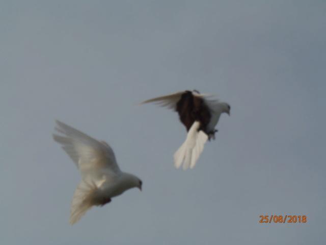 Птица Александра Алешкова P8250110
