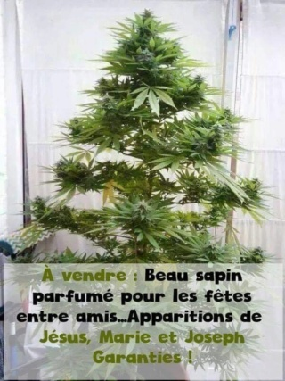HUMOUR  du jour - Page 4 Tapin110