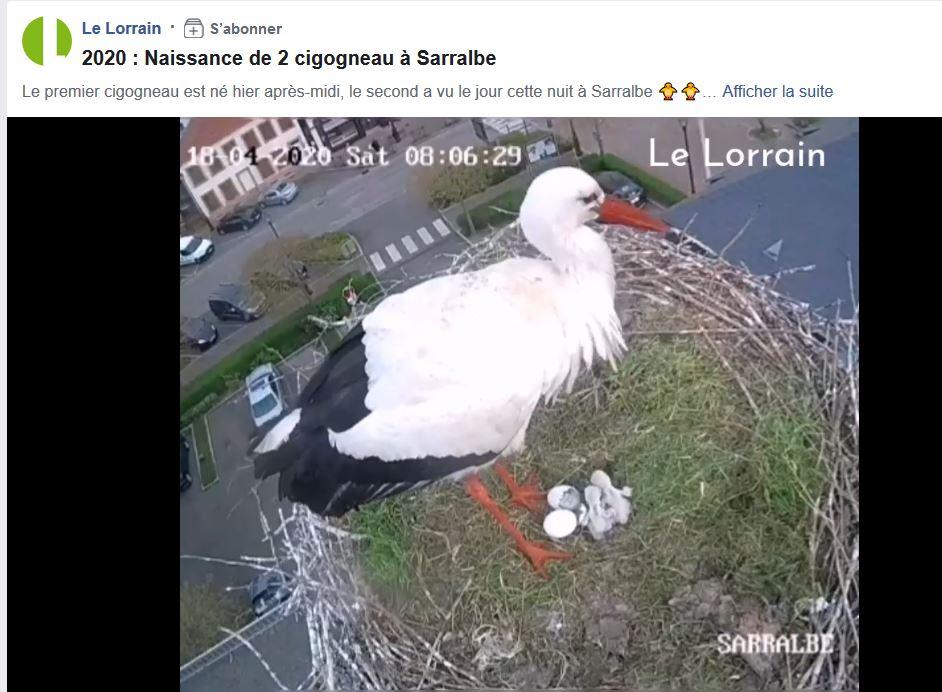 Lorraine ascendant cigogne - Page 20 Cigzo10