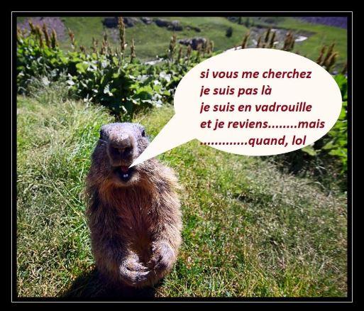 Aspects de Septembre - Page 9 Marmot10