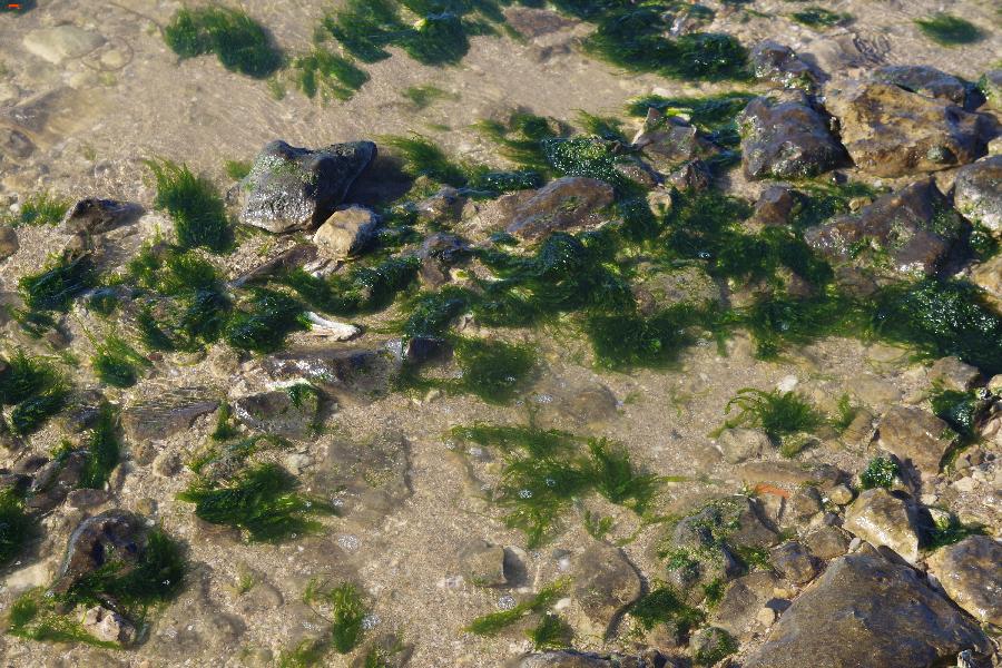 Fouras, la marée, les animaux et R'Bus Imgp8213