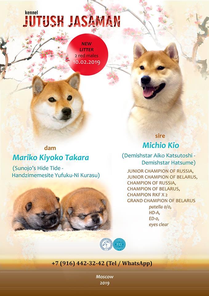 Детки п-ка  JUTUSH JASAMAN от пары МАЙК❤️МИККИ! MICHIO KIO(DEMISHSTAR AIKO KATSUTOSHI & DEMISHSTAR HATSUME) & MARIKO KIYOKO TAKARA (SUNOJO'S HIGH TIDE & HANDZIMEMESITE YUFUKU-NI KURASU) 52980411