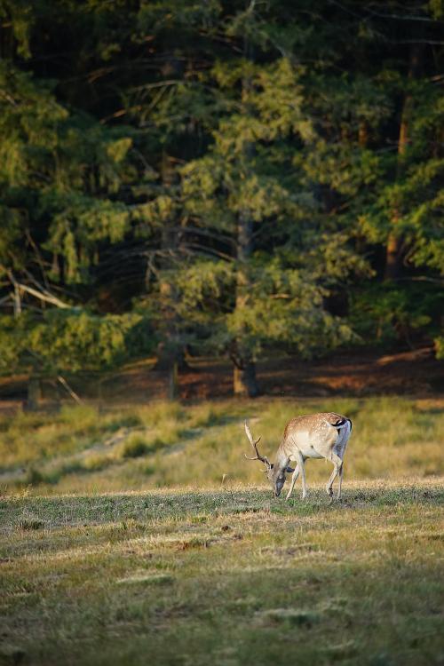 Une semaine avec les cerfs et les daims de Boutissaint Boutis38