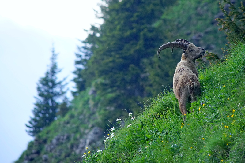 Quelques visions en nature - Cache cache avec les marmottes -  12/07 Dsc07610
