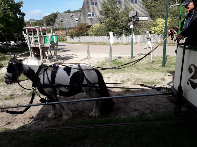Die älteste Pferdebahn Europas auf Spiekeroog. 20190176