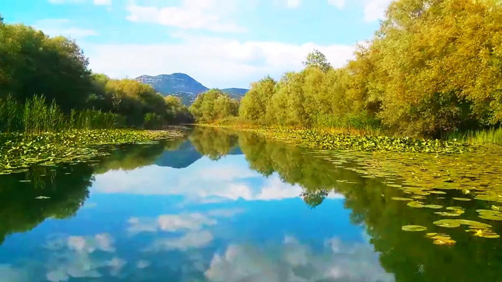Mušičarenje klena na Skadarskom jezeru Img_2017