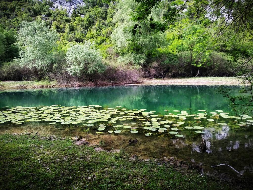 Mušičarenje klena na Skadarskom jezeru Img_2028