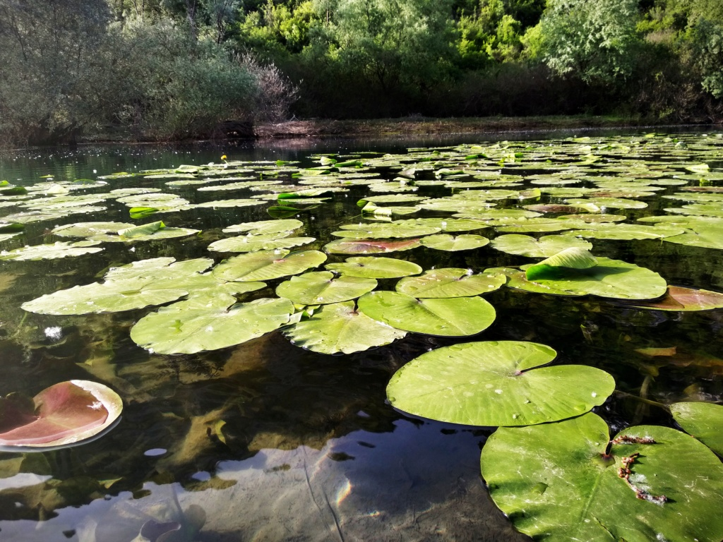 Mušičarenje klena na Skadarskom jezeru Img_2029