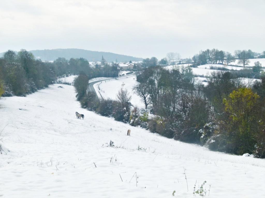 Place pré de 5ha avec abri 6x3, forêt, source, ruisseau, foin à volonté l'hiver / 40mn de Grenoble / balades P1120210