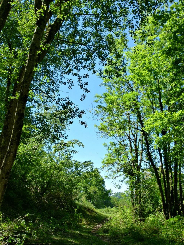 Place pré de 5ha avec abri 6x3, forêt, source, ruisseau, foin à volonté l'hiver / 40mn de Grenoble / balades P1130916