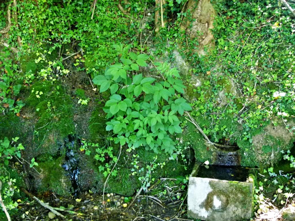 Place pré de 5ha avec abri 6x3, forêt, source, ruisseau, foin à volonté l'hiver / 40mn de Grenoble / balades P1130919