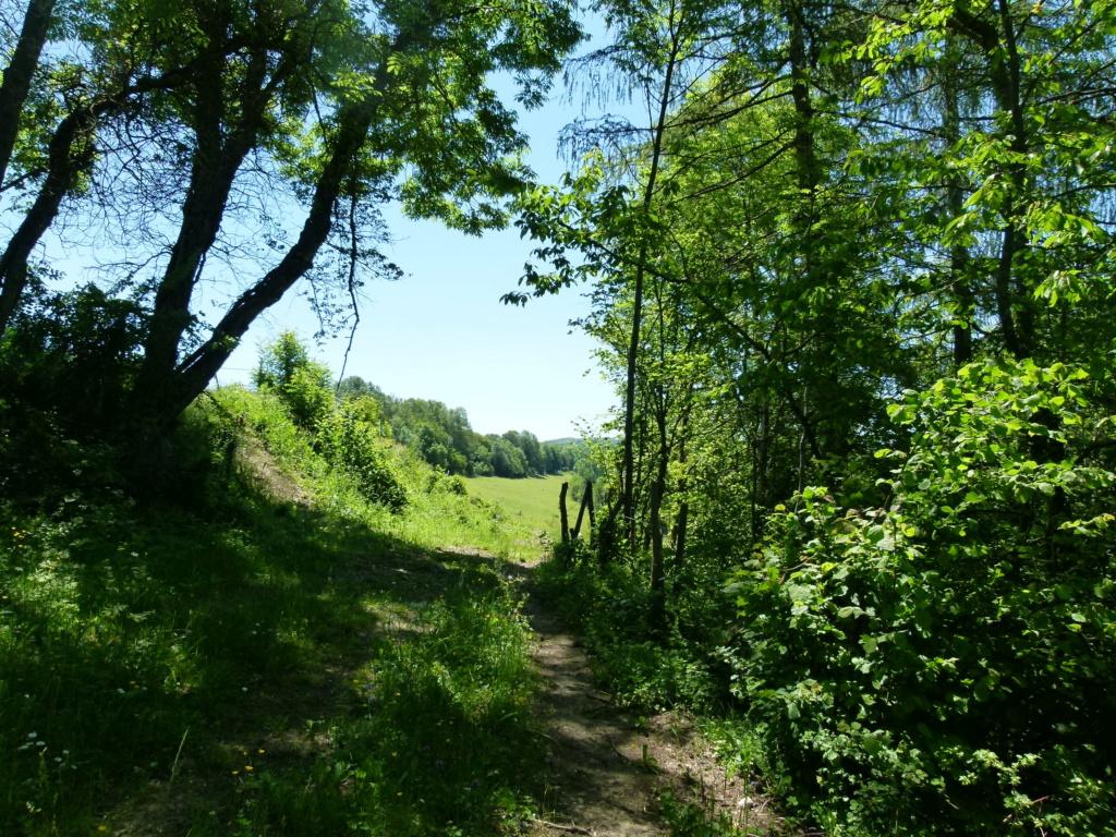 Place pré de 5ha avec abri 6x3, forêt, source, ruisseau, foin à volonté l'hiver / 40mn de Grenoble / balades P1140013