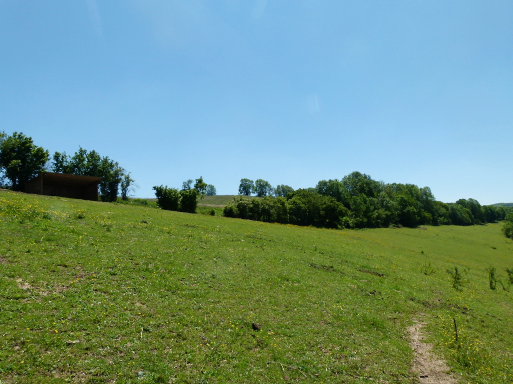 Place pré de 5ha avec abri 6x3, forêt, source, ruisseau, foin à volonté l'hiver / 40mn de Grenoble / balades P1140014