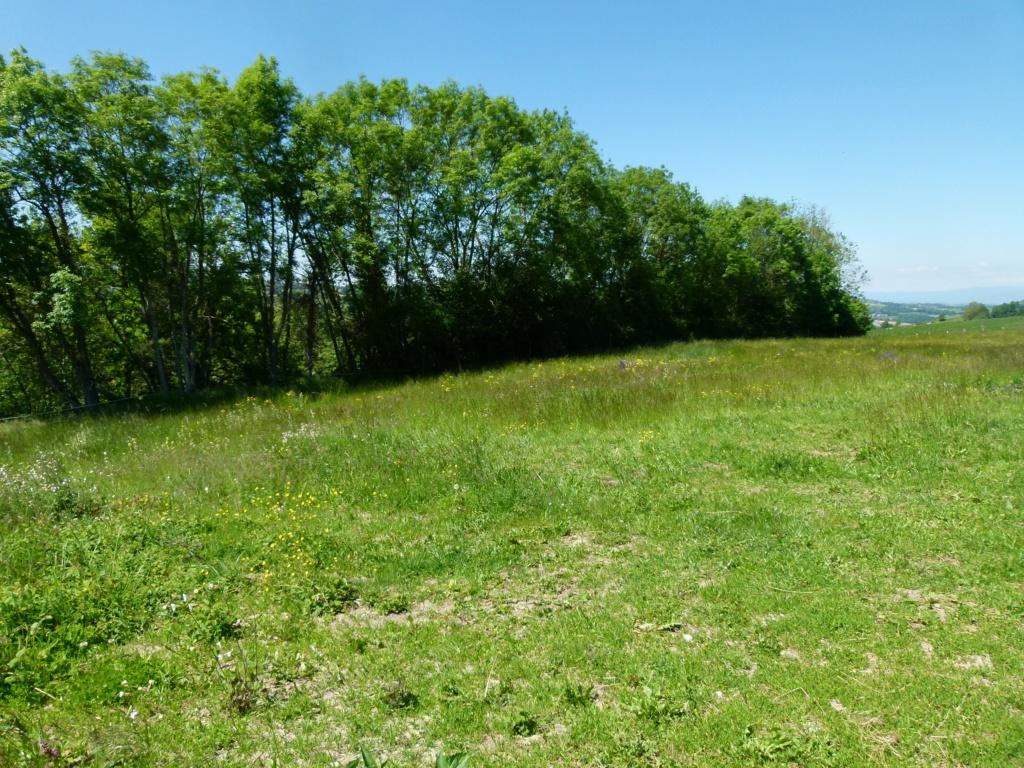 Place pré de 5ha avec abri 6x3, forêt, source, ruisseau, foin à volonté l'hiver / 40mn de Grenoble / balades P1140015