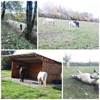 Place pré de 5ha avec abri 6x3, forêt, source, ruisseau, foin à volonté l'hiver / 40mn de Grenoble / balades Page210
