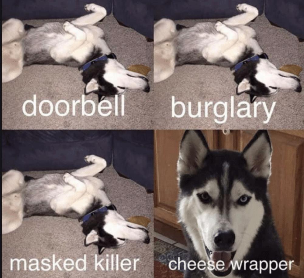 Husky Cross Welcome? Cheese10