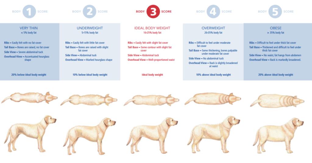 Weight - wondering if Kona is a bit heavy Dog_we10