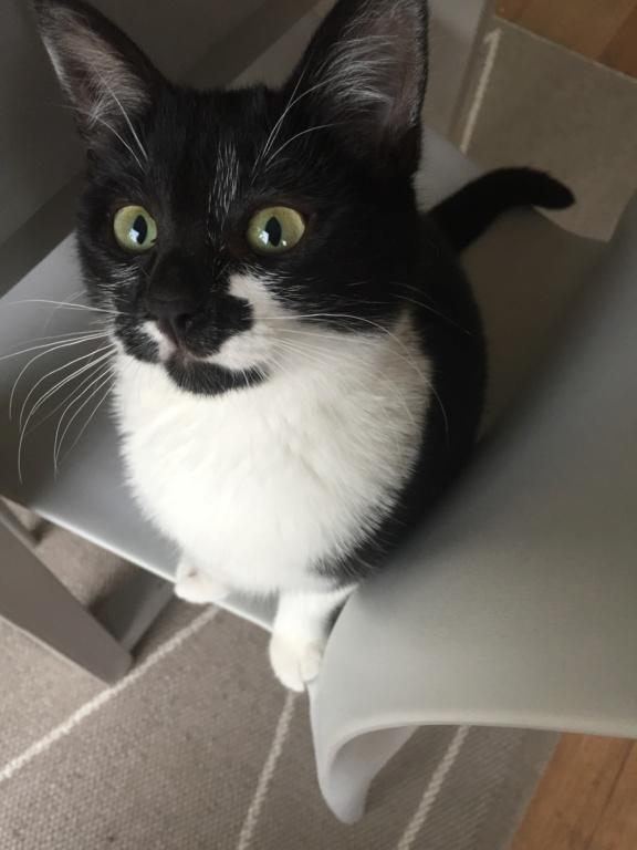 PEPITE, chatonne noire et blanche,  née le 02/07/2019 156fe410