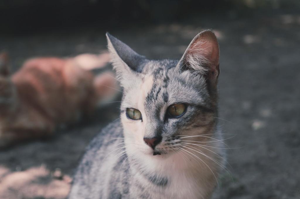 Violetpaw - Thunderclan Cat10