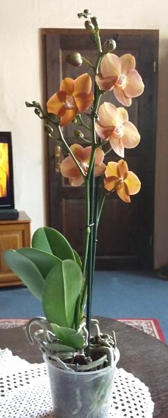 Orchideen-Neuzugang 2 - Seite 21 20190610