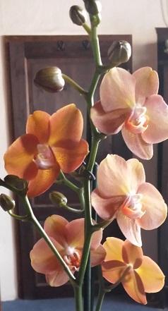 Orchideen-Neuzugang 2 - Seite 21 20190611
