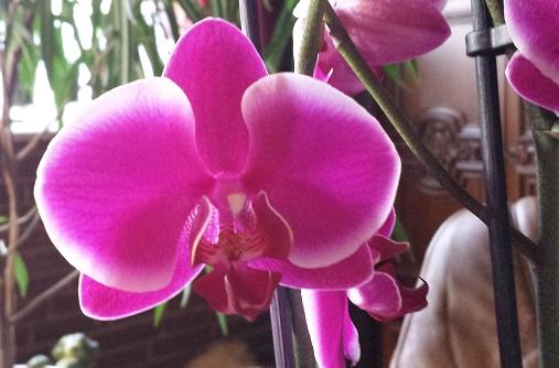 Orchideen-Neuzugang 2 - Seite 21 20190626
