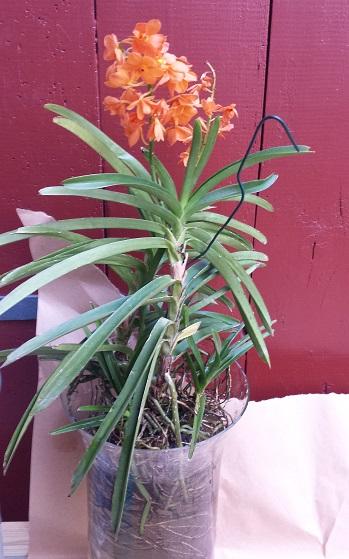 Orchideen-Neuzugang 2 - Seite 21 20190820