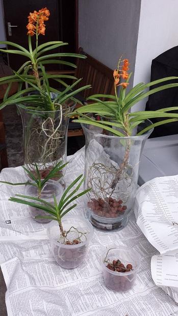 Orchideen-Neuzugang 2 - Seite 21 20190821