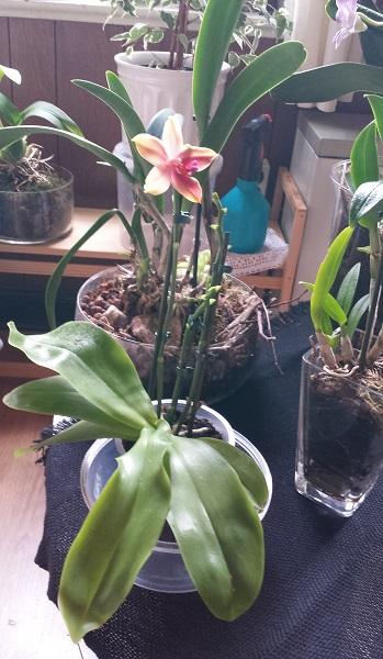 Orchideen-Neuzugang 2 - Seite 20 Aaa20110