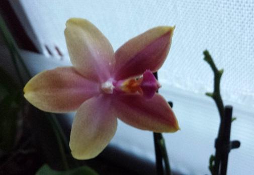 Orchideen-Neuzugang 2 - Seite 20 Aaa20111