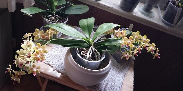 Orchideen-Neuzugang 2 - Seite 20 Aaa20113