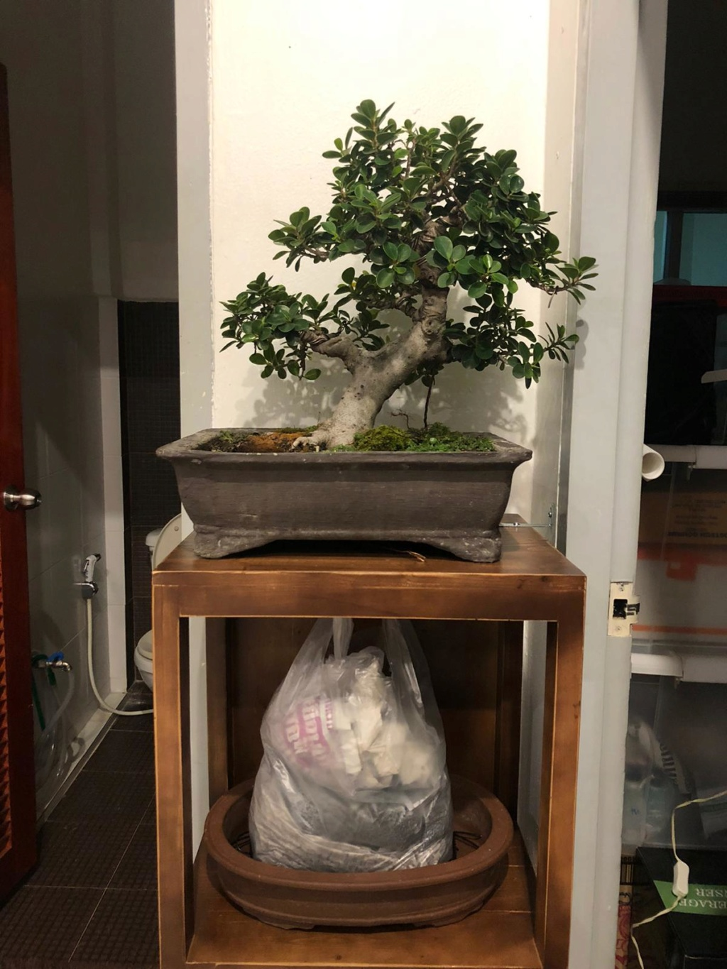 Indoor Bonsai under LED lights. - Page 18 Whatsa10