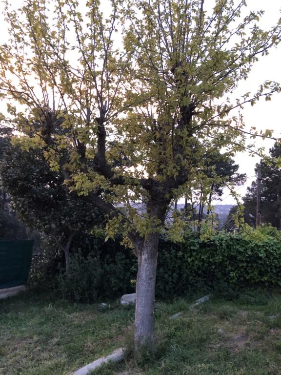 Por no ser bonsai, escribo aquí, a ver si podeis ayudarme. Ffe9f110