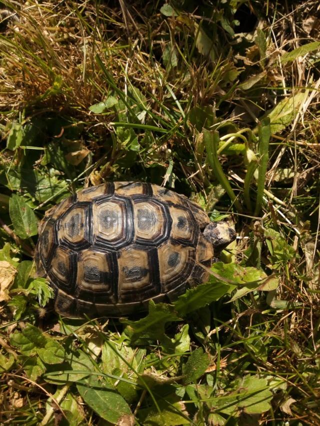 Identification espèce / âge 95830910
