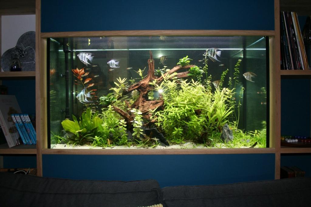 Aquarium intégré dans bibliothèque Img_8416