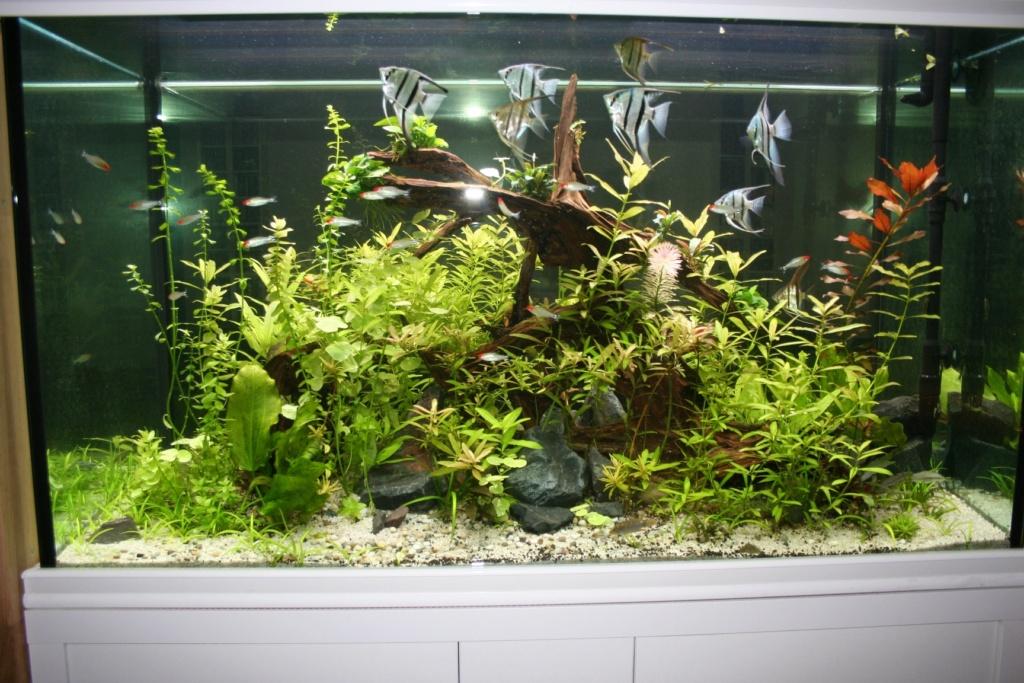 Aquarium intégré dans bibliothèque Img_8417