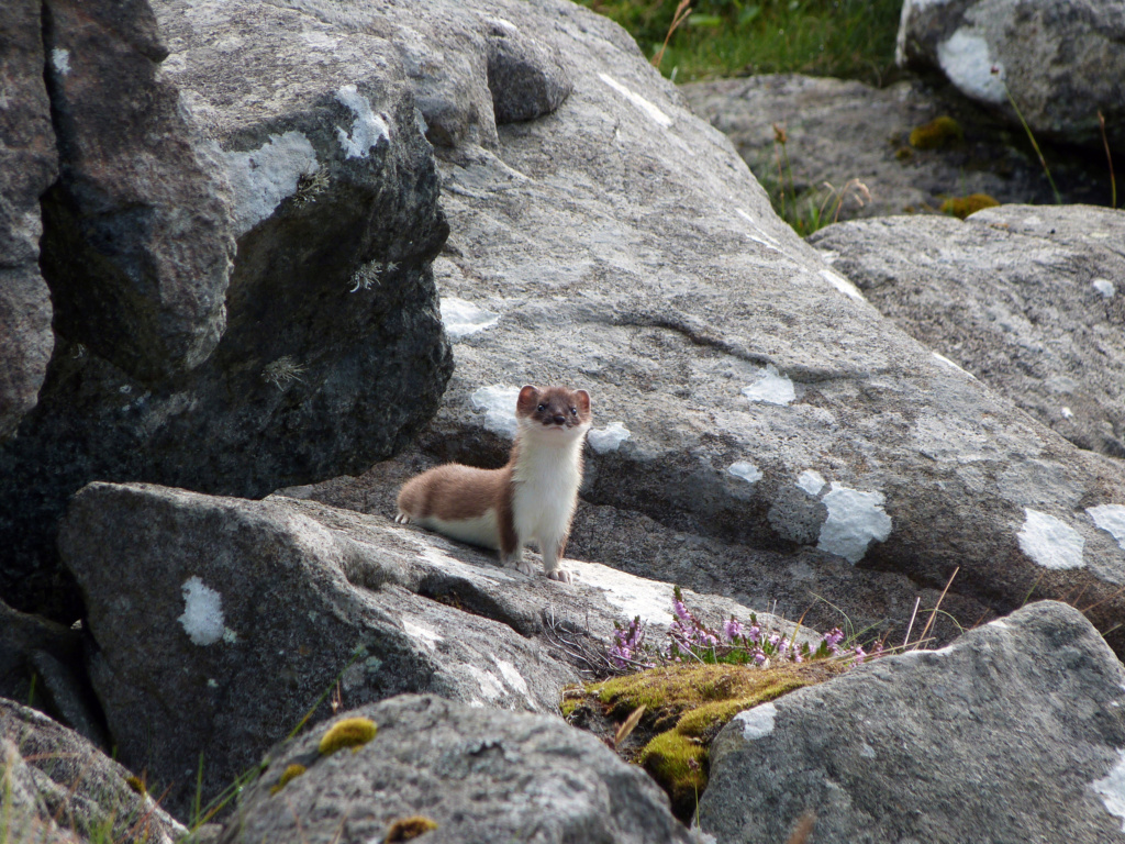 Divers animaux de Norvège au FZ8 P1020411