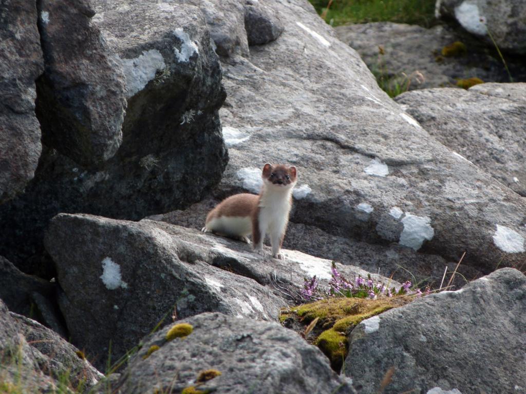 Divers animaux de Norvège au FZ8 P1020413