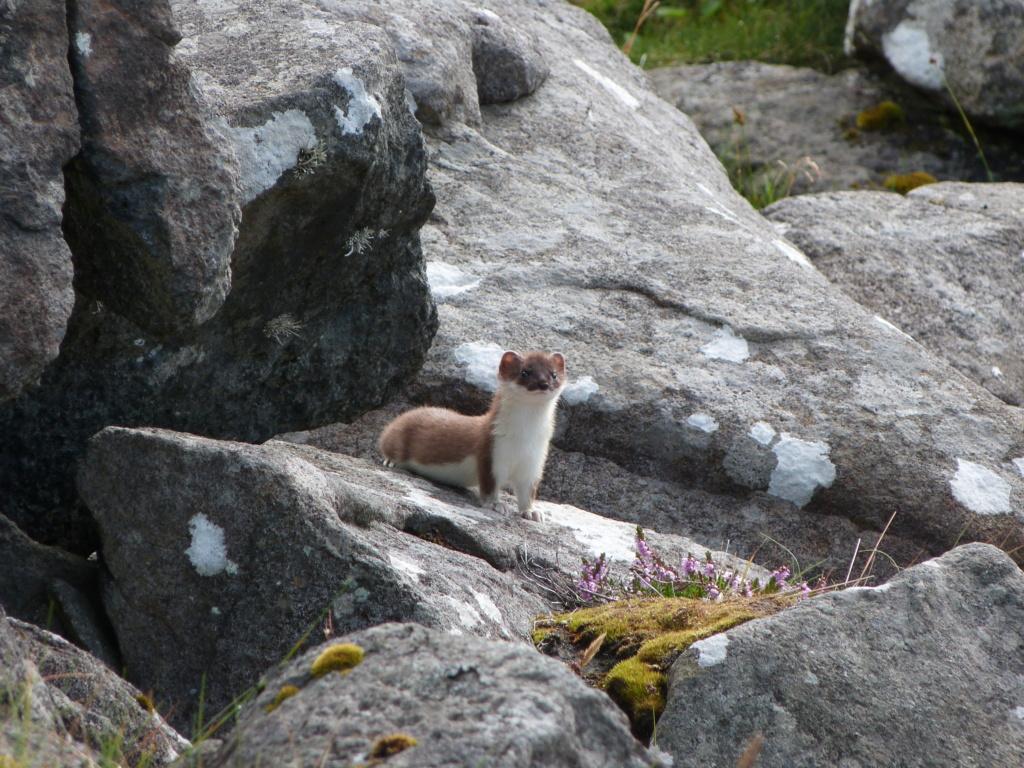 Divers animaux de Norvège au FZ8 P1020414