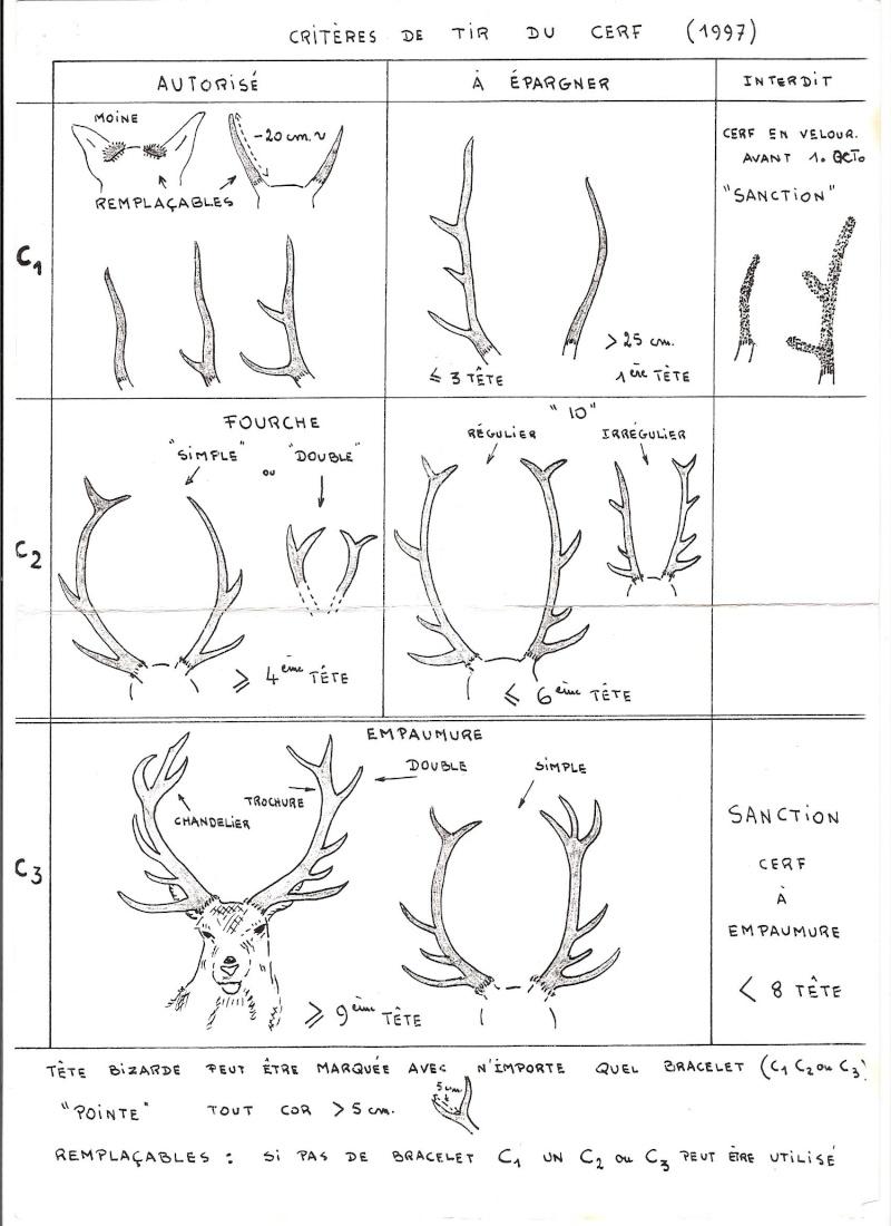 Mues de cerfs ou de chevreuils - Page 4 Cotat_10