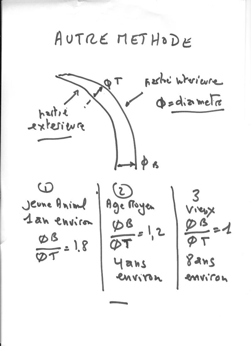 Reconnaître un mâle (sanglier) - Page 7 Sangli13