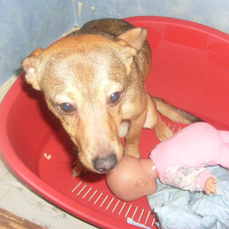 Diego, petit PINSCHER mâle de 9 mois  ADOPTE (RP) Diego10