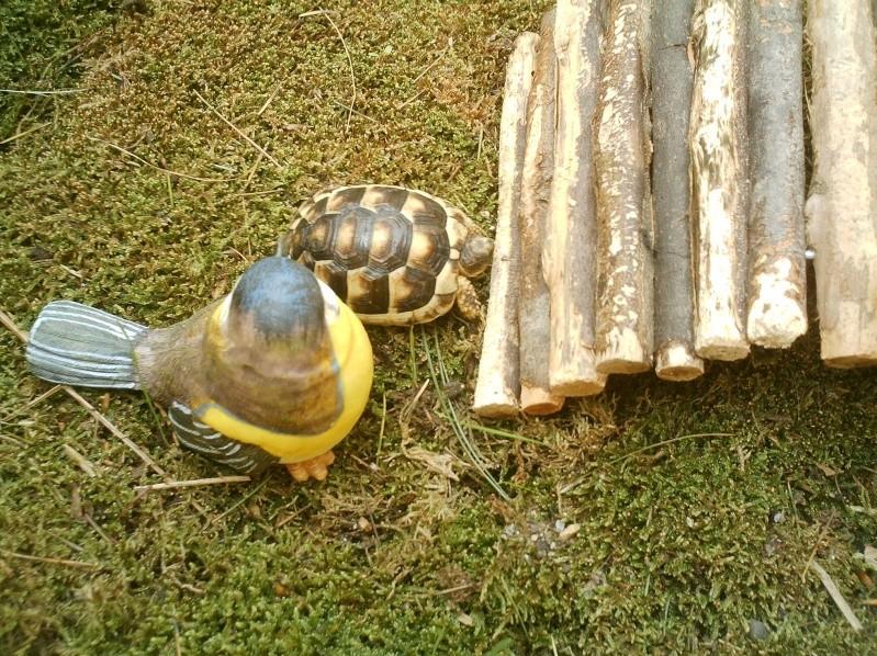 les tortues d eau et de terre(terrestre)... Annive10